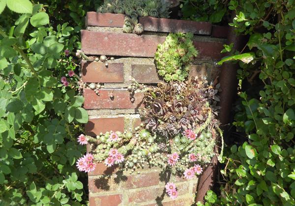 Mauerpfosten mit Sedum und Hauswurz in Blüte