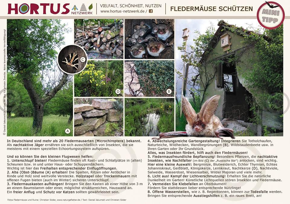 MiniTipp Fledermäuse schützen von Daniel Jakumeit